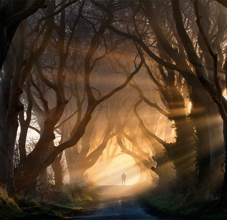 7530560-R3L8T8D-880-amazing-trees-6-1