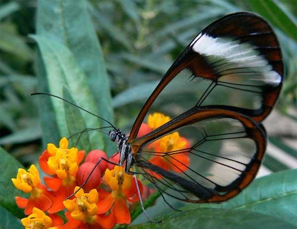fluture-2